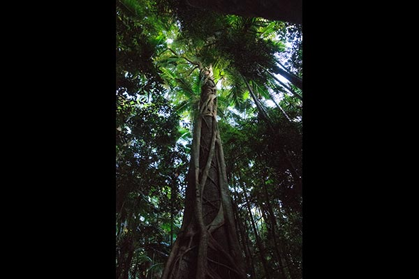 frogshollow flaxton rainforest