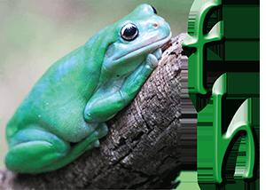 frogshollow